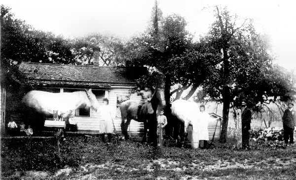 The Quagliata Farm in Zurich, NY  c. 1921